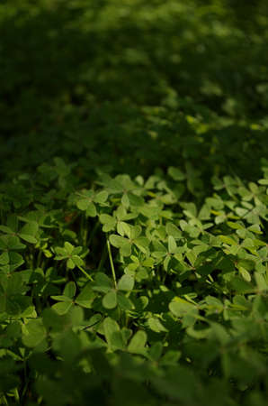 Looking for the four-leaf clover