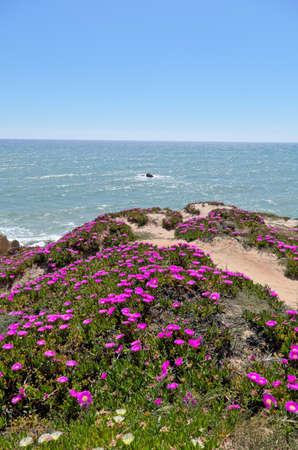 Scene captured in Chiringuitos beach (also called Gale beach), Albufeira. Algarve, Portugal Фото со стока - 84407705