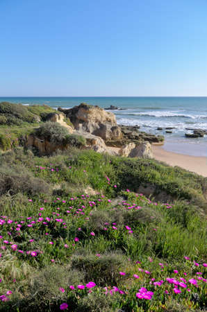 Scene captured in Chiringuitos beach (also called Gale beach), Albufeira. Algarve, Portugal Фото со стока