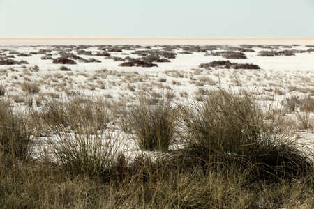 Heathland with white sand dunes and blue sky Stock Photo - 12360126