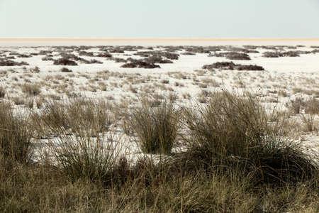 heathland: Heathland with white sand dunes and blue sky