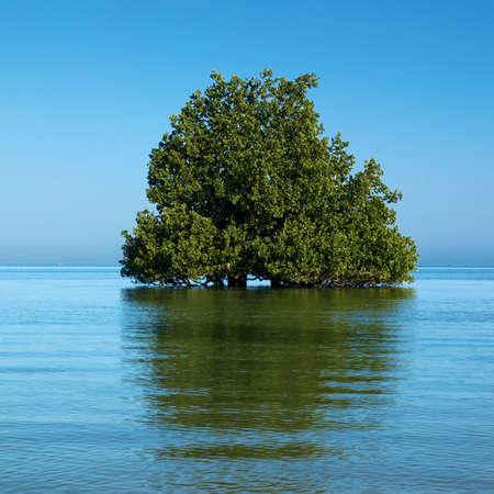 mangrove tree on the indian ocean madagascar photo
