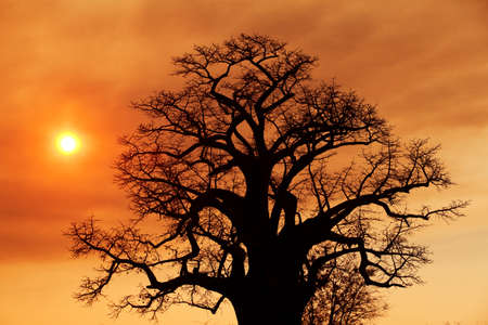 African sunset on the savanna plains photo