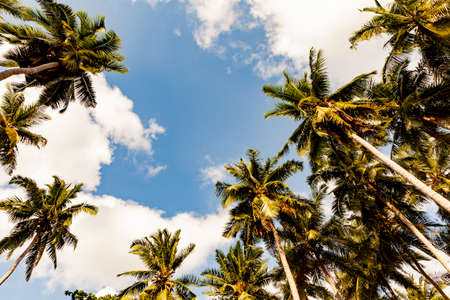 Palm trees against blue sky, Palm trees at tropical coast, stylized, coconut tree