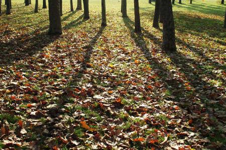 Shadows of autumn trees photo