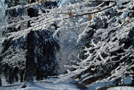 winter tree-detail Stock Photo - 302104
