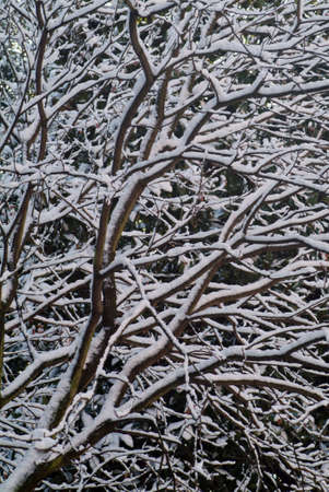 branch with snow Stock Photo - 302105