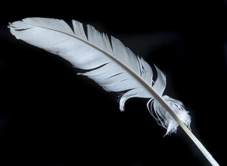 white feather: single white feather over black