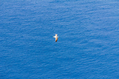 A seagull flying over the mediterranean sea, in Calpe, Spain