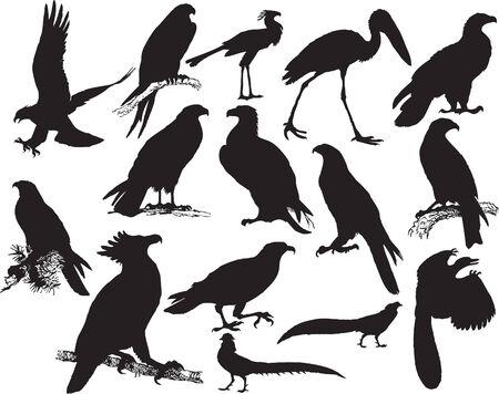 Vector illustration silhouette of many birds (black) Illustration