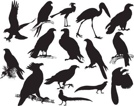swooping: Vector illustration silhouette of many birds (black) Illustration