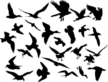 squawk: Vector illustrations black silhouettes birds on white