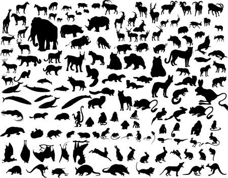 Gran colecci�n de diferentes animales ilustraci�n vectorial  Foto de archivo - 2404934