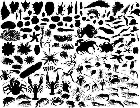 Big vector collection of different mollusks and other invertebrates Vector