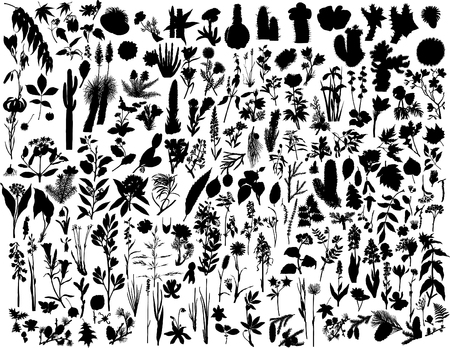 Big collection of different vector plants silhouettes Vector