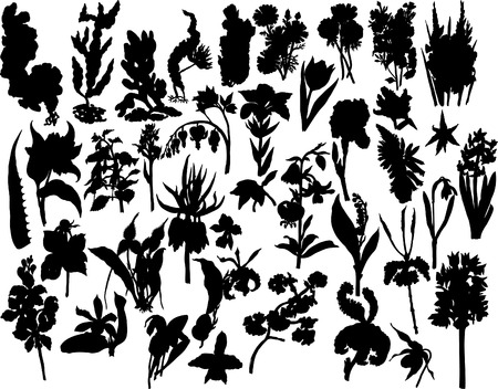 Big collection of different vector plants silhouettes Stock Vector - 2785151