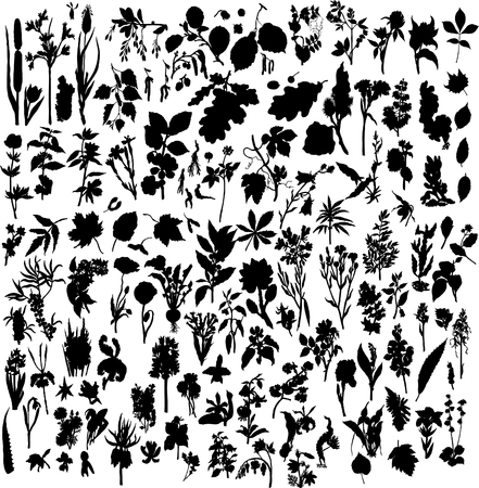 foliages: Big collection of different plants silhouette