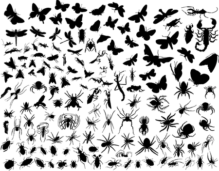 butterfly tail: Big collection of different vector insects silhouettes