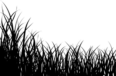 grass illustration: Vector illustration grass background for design usage