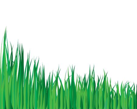 uncultivated: Vector illustration grass background for design usage