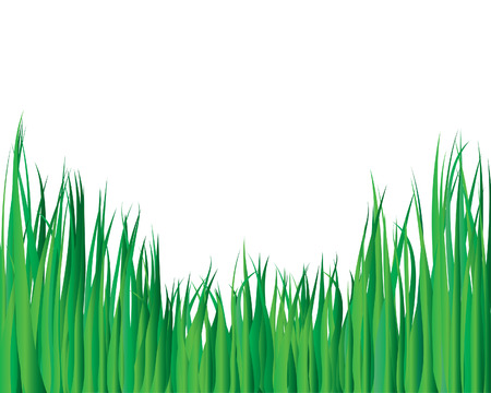 Vector illustration grass background for design usage Stock Vector - 3175953