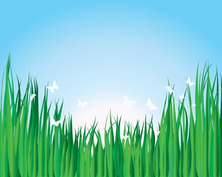 spring bed: Vector illustration grass background for design usage