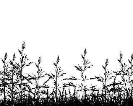Ilustración vectorial trigo de antecedentes para el diseño uso