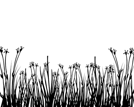 Grass silhouettes ornate on the white background Vector