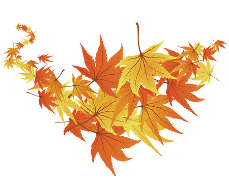 Twisted row of autumn  maples leaves. Vector illustration. Illustration