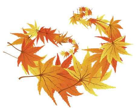 Twisted row of autumn  maples leaves. Vector illustration. Stock Vector - 3570966