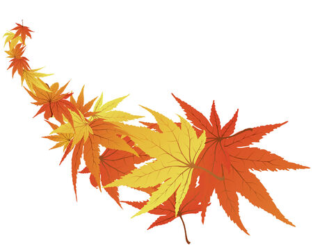 Twisted row of autumn  maples leaves. Vector illustration. Stock Vector - 3570959