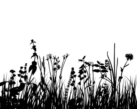 Grass silhouettes ornate on the white background Stock Vector - 3607557