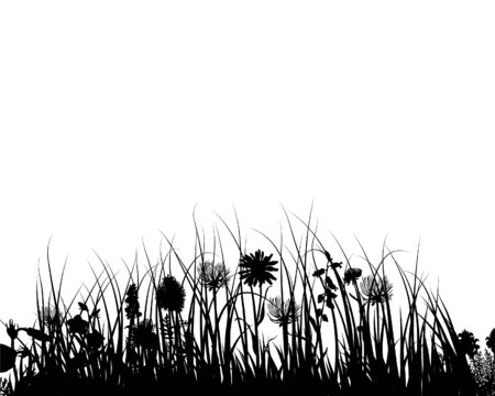 Grass silhouettes ornate on the white background Stock Vector - 3607560