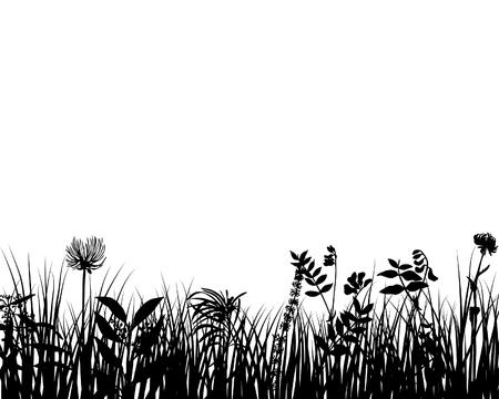 zwart wit tekening: Gras silhouetten sierlijke op de witte achtergrond
