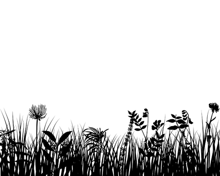 cadre noir et blanc: Grass silhouettes fleuris sur le fond blanc
