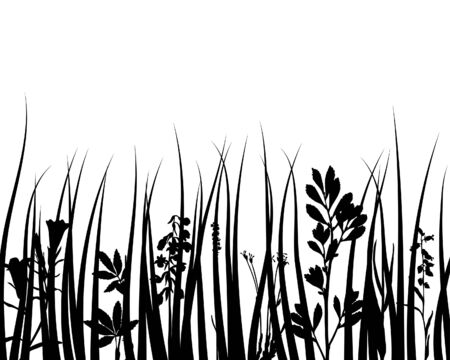 Grass silhouettes ornate on the white background Stock Vector - 3858629