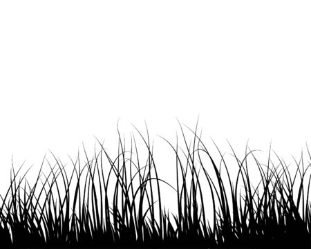 Grass silhouettes ornate on the white background Stock Vector - 3984464