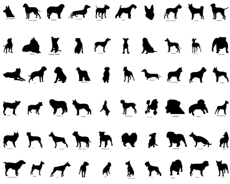 pointer dog: Big collection vector silhouettes of dogs with breeds description