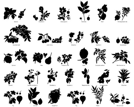Fruits and berries vector plants silhouettes set