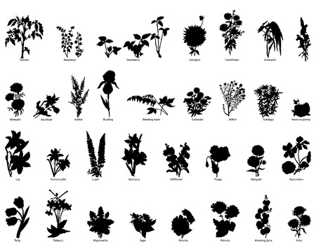 Collection of different garden vector silhouettes of plants
