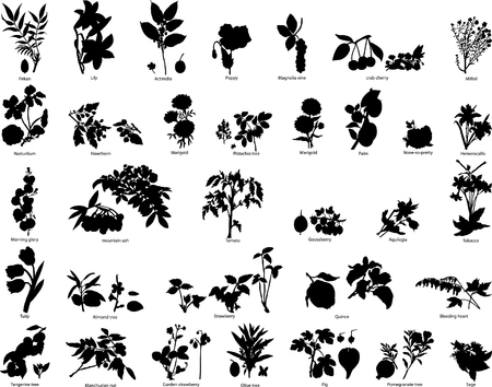 Collection of different vector berries and flowers Stock Vector - 4198428