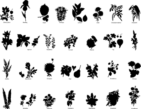 Collection of different vector berries and flowers  Illustration