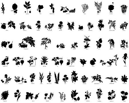 plante design: Collection de vecteur diff�rents petits fruits et fleurs