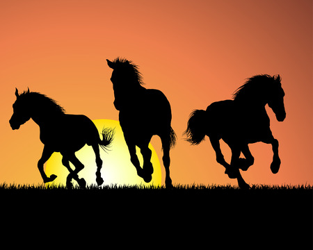black horses: Horse silhouette on sunset background. Vector illustration.