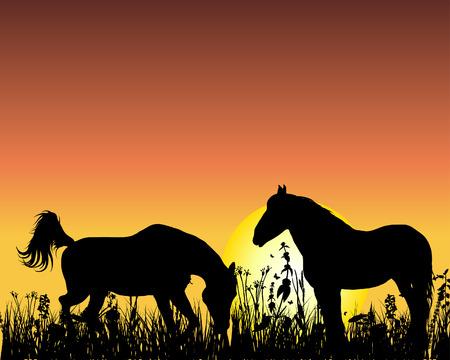 grazing: Horse silhouette on sunset background. Vector illustration.