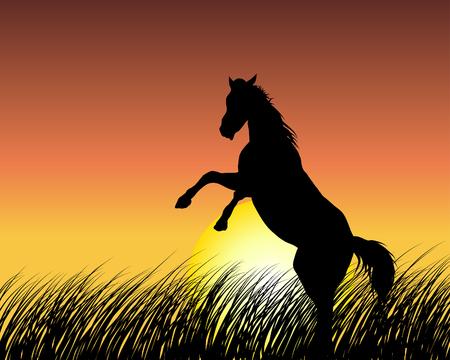 Silhouette a cavallo su sfondo tramonto. Illustrazione vettoriale.