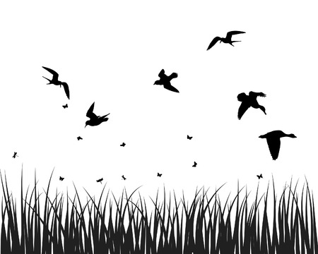 grasslands: Vector grass silhouettes backgrounds for design use