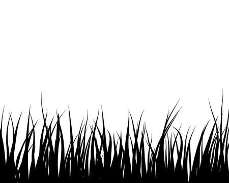 landscaped garden: Vector grass silhouettes backgrounds for design use