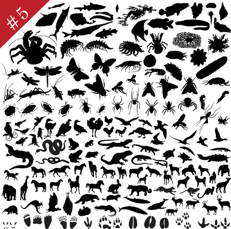 # 5 set of  different animals, birds, insects and fishes  vector silhouettes  Vector