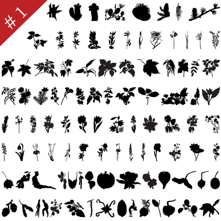 Vector collection of different plants and flowers silhouettes #1 Illustration